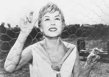 Nights of Cabiria movies in Canada